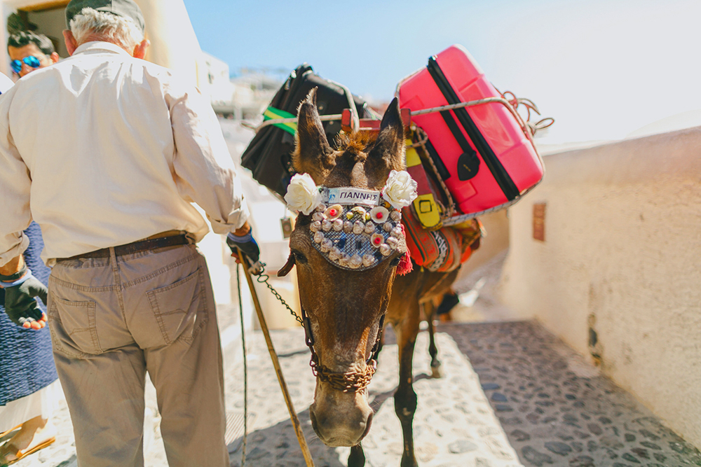 Santorini donkey at Imerovigli